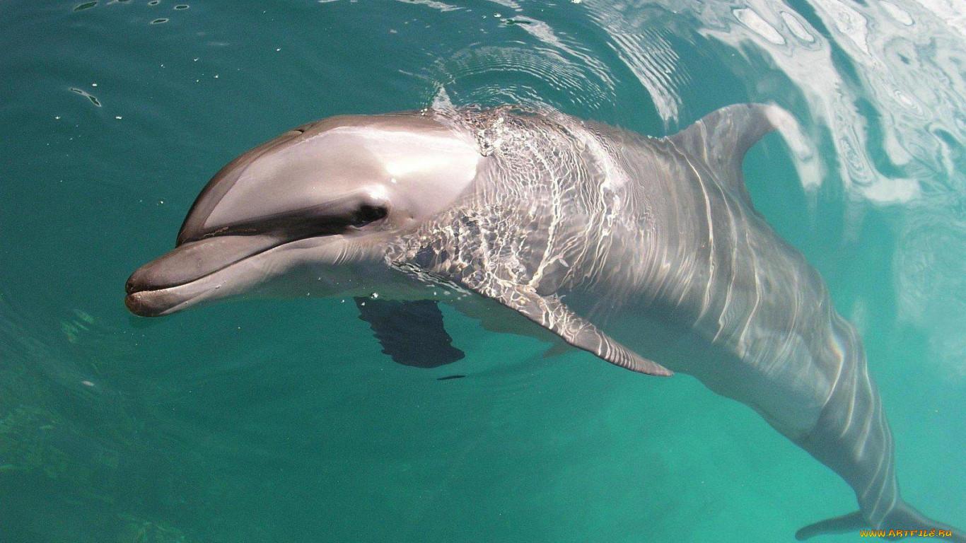 дельфин фото животное картинки тут-то споры